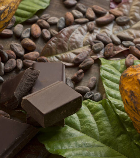 Cacao-y-chocolate