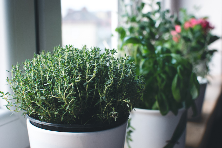 6 hierbas aromáticas para cultivar en casa