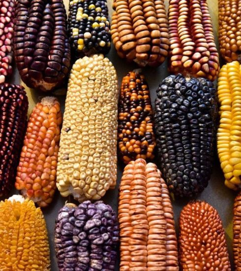 México-maíz